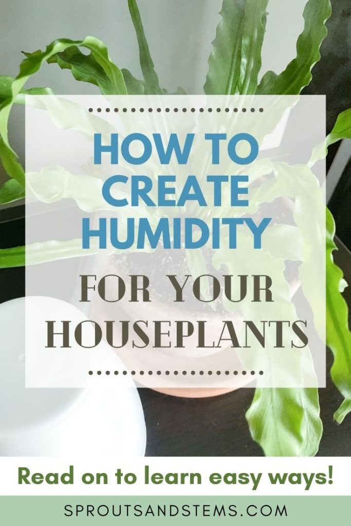 how to create humidity for houseplants pinterest pin