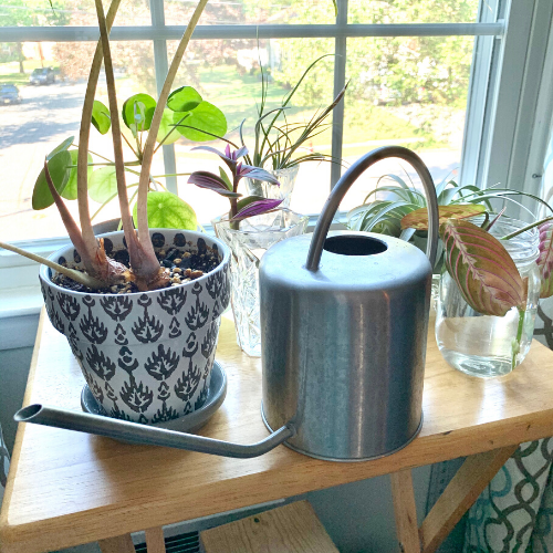 plants and watering can on a table