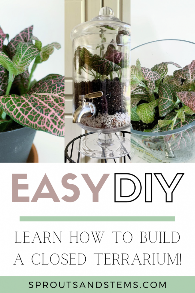 Diy Closed Terrarium Layer By Layer Sprouts And Stems