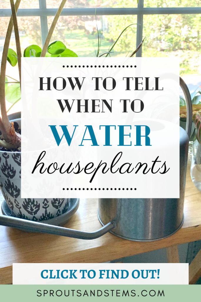 when to water your houseplants pin