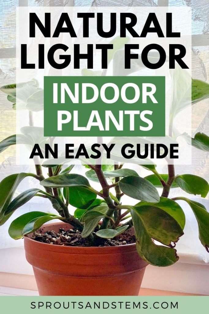 natural light for indoor plants pin