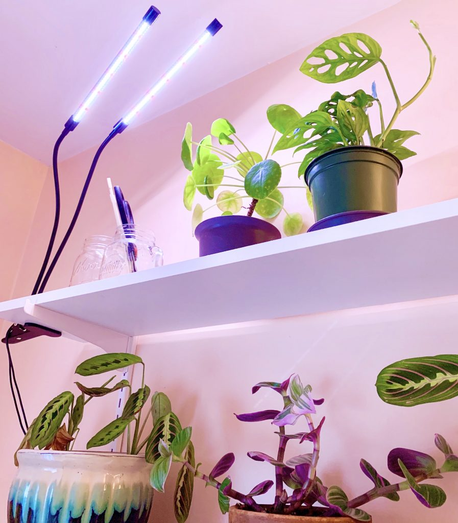 Artificial lights for houseplants