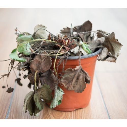 root rot on houseplants