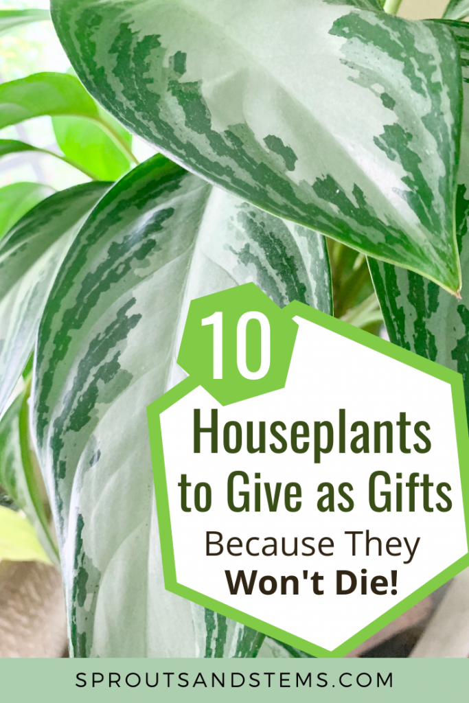 houseplants as gifts