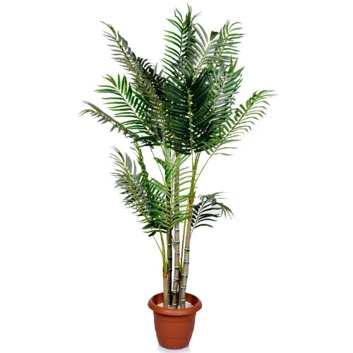 parlor palm care blog post