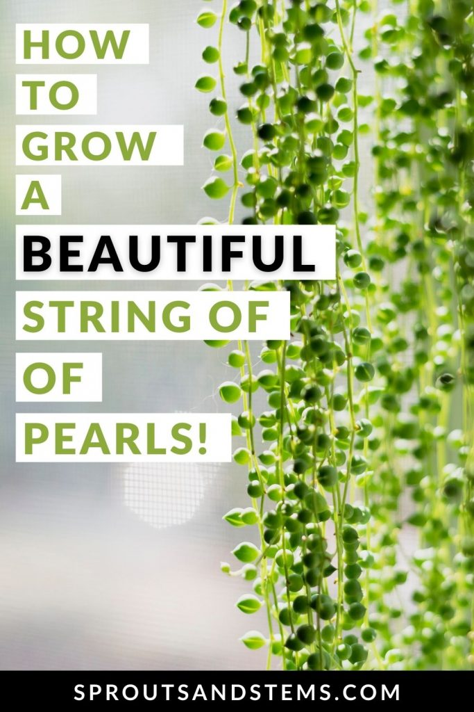 string of pearls care pinterest pin
