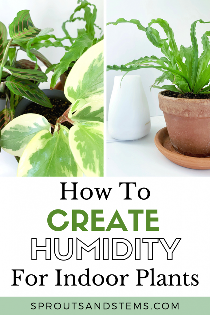 how to create humidity for plants