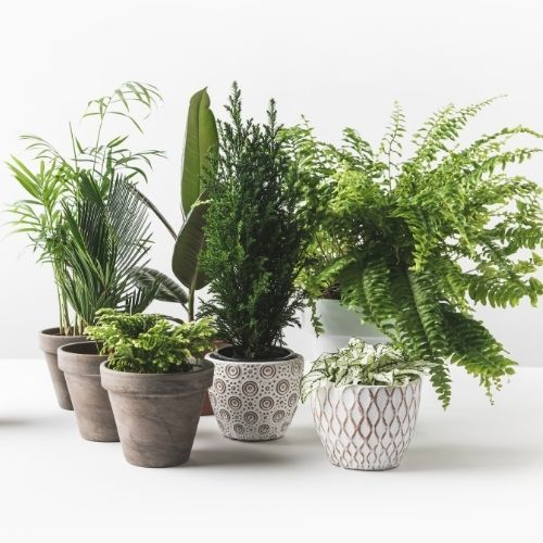 group of plants on a table
