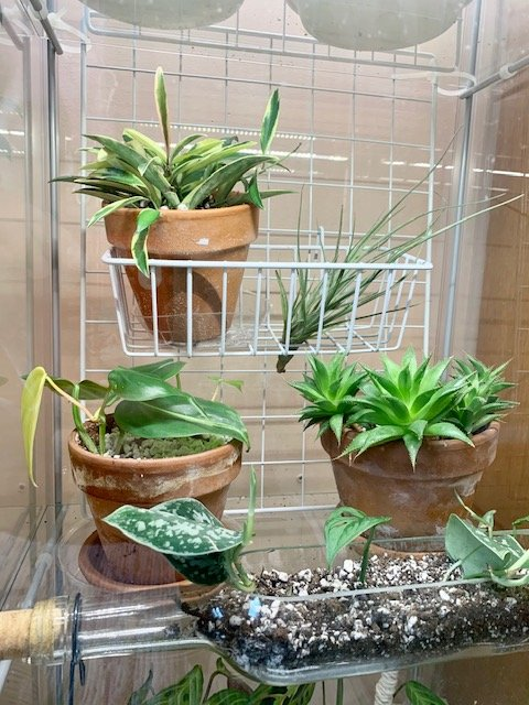 greenhouse cabinet wire rack and basket