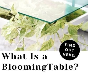 what is a bloomingtable?