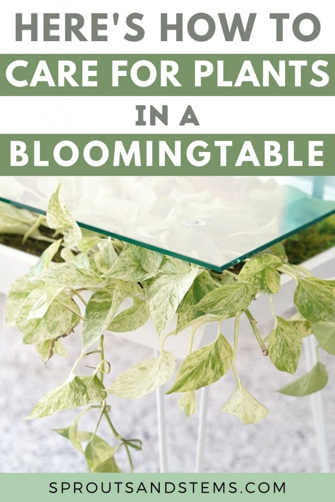 bloomingtable plant care