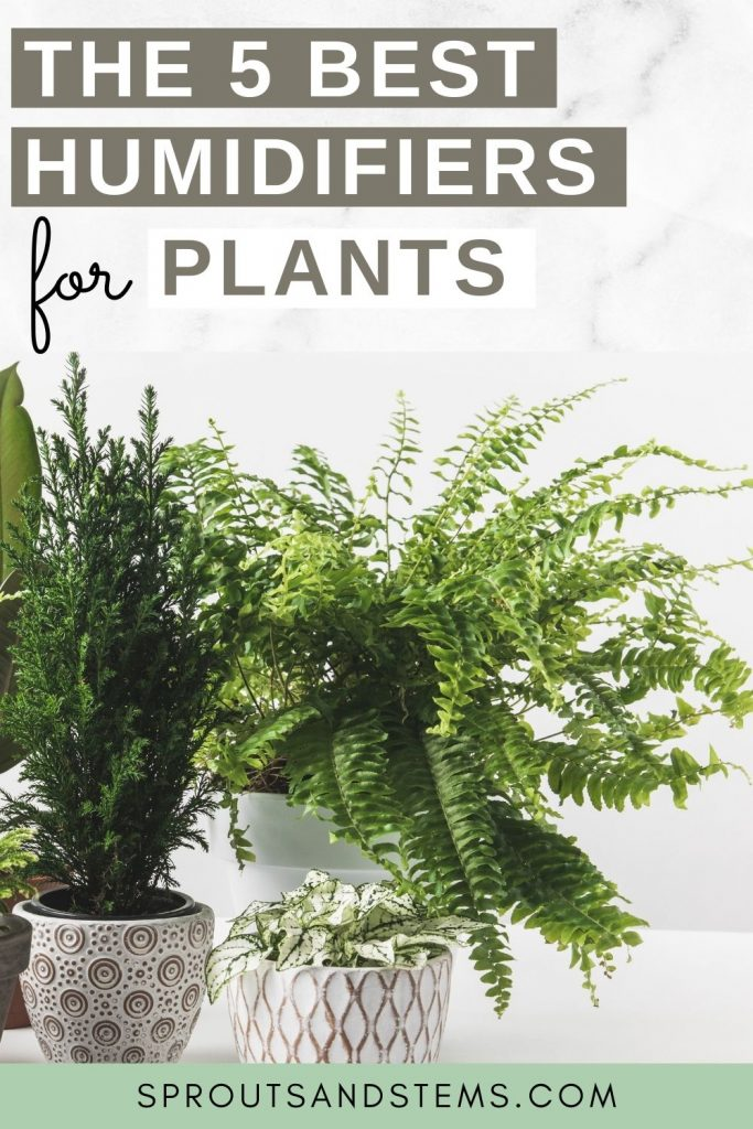 best humidifiers for plants pinterest pin