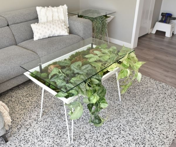 blooming table with pothos plants