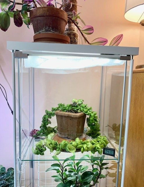 greenhouse cabinet top shelf with plants