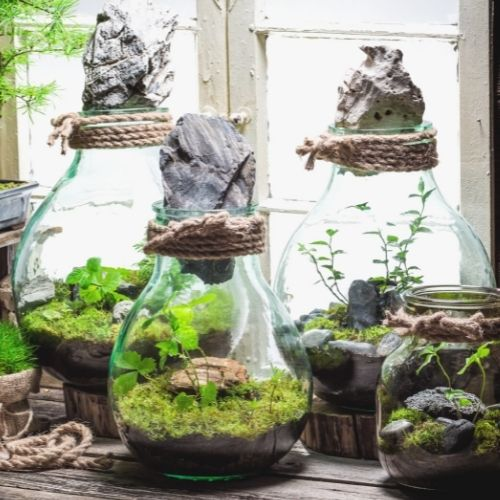 three closed terrariums with plants